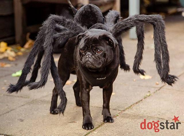Devilish Dog Walk